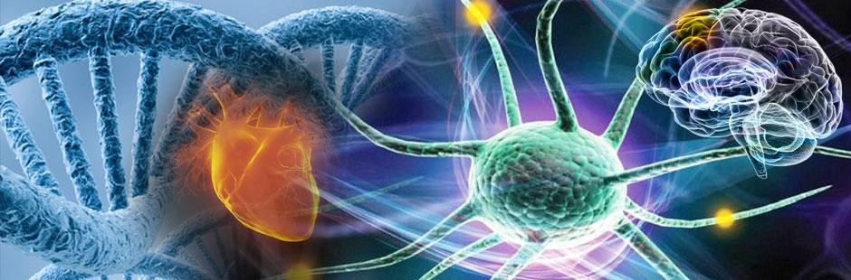 Biyoteknoloji,DNA,Gen