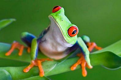 Kurbağa Sendromu